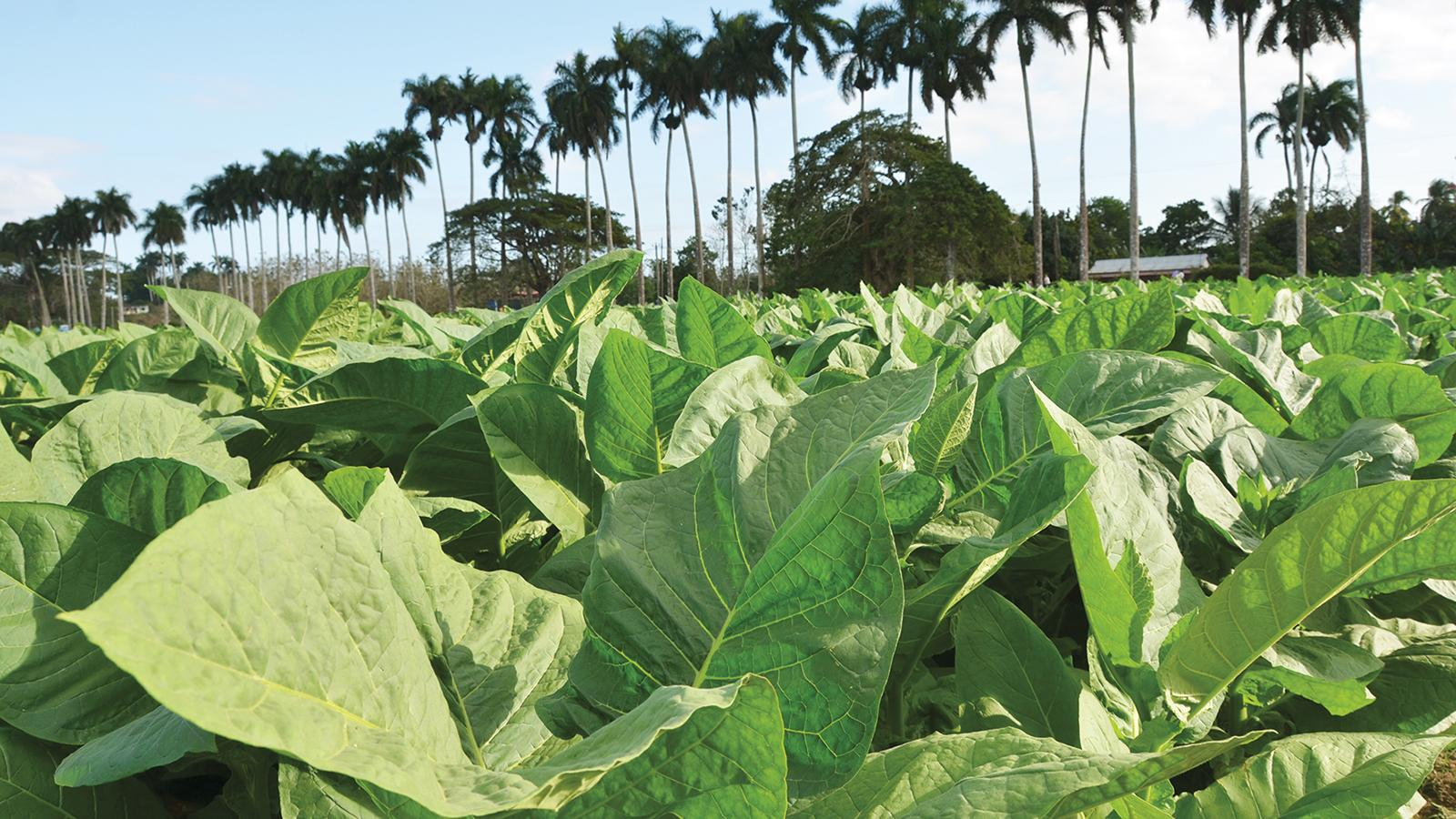 Planting Season Officially Opens in Cuba