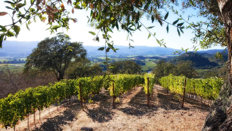 Tasting Highlights: 10 Rich Napa Chardonnays
