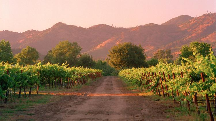 Tasting Highlights: 9 California Cabernets