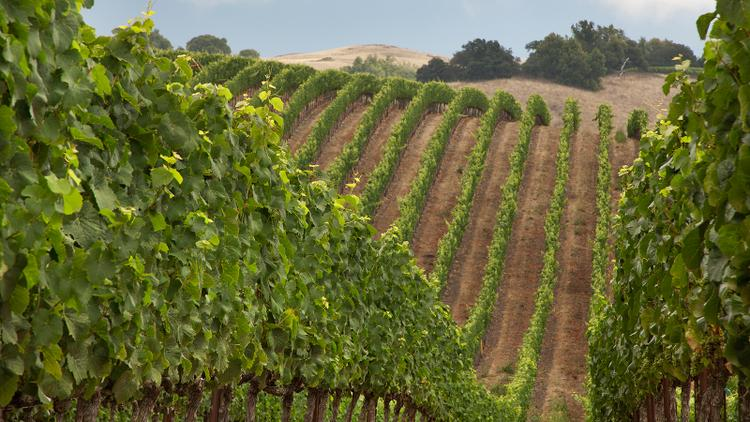 Tasting Highlights: 10 California Pinot Noirs