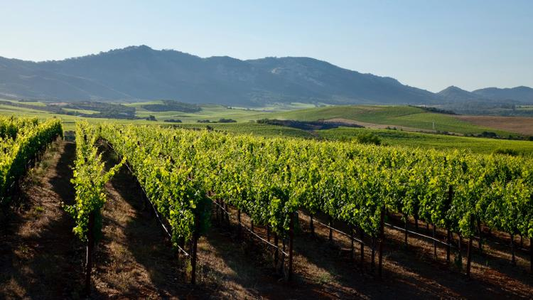 Exclusive: Gallo Buys Napa's Stagecoach Vineyard