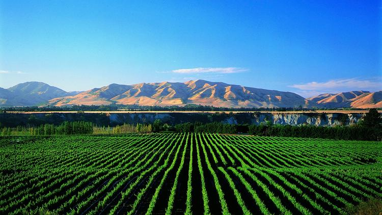 New Zealand Winery Directors Accused of Fraud