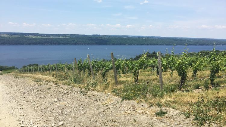 Tasting Highlights: 15 Finger Lakes Standouts
