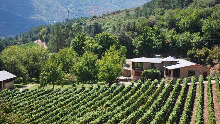 Tasting Highlights: 11 Exciting Whites from Spain