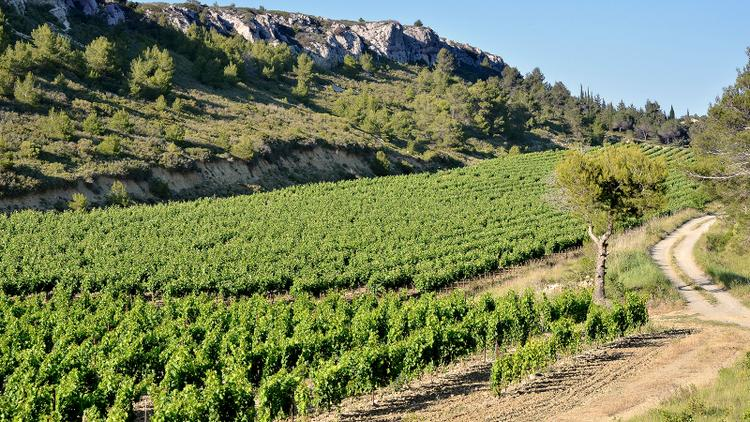 Tasting Highlights: 12 Southern France Discoveries
