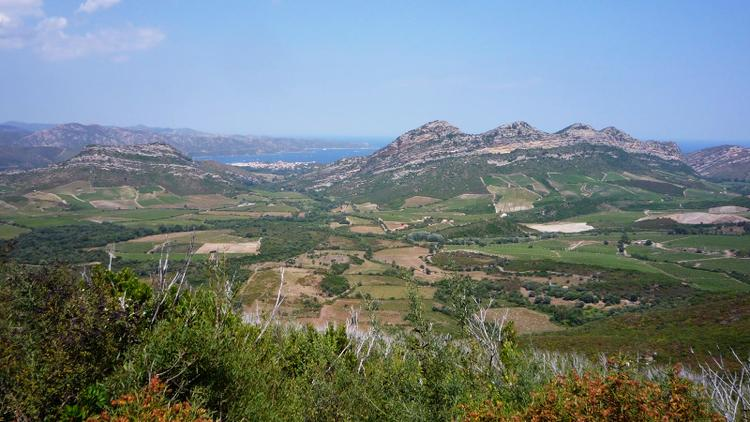 Tasting Highlights: 12 Corsican Value Wines