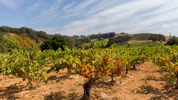 Tasting Highlights: 15 Exciting California Rhônes