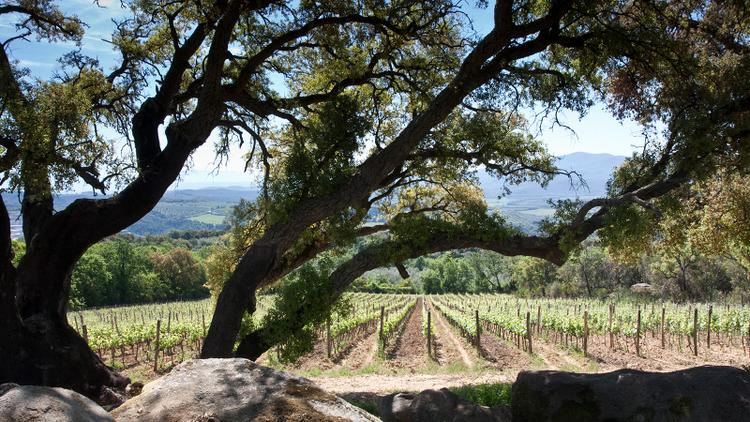 Tasting Highlights: 10 Exceptional Tuscan Values