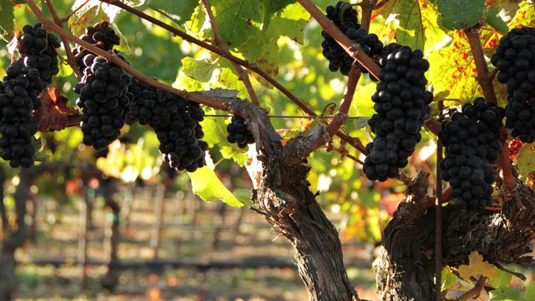 Video: Pinot Pairing Strategies