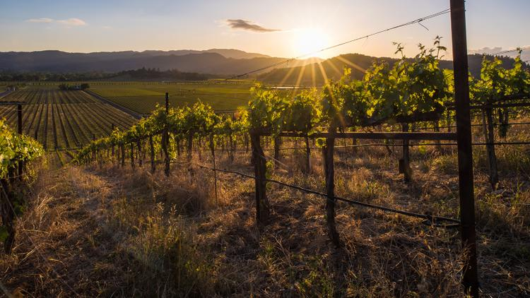 Video: Stags Leap District Cabernet