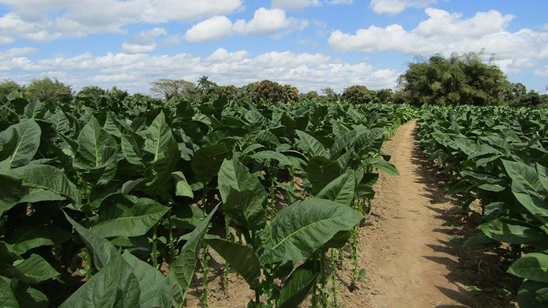 Out Of The Brick-Red Soil: A Visit To The Prieto Farm