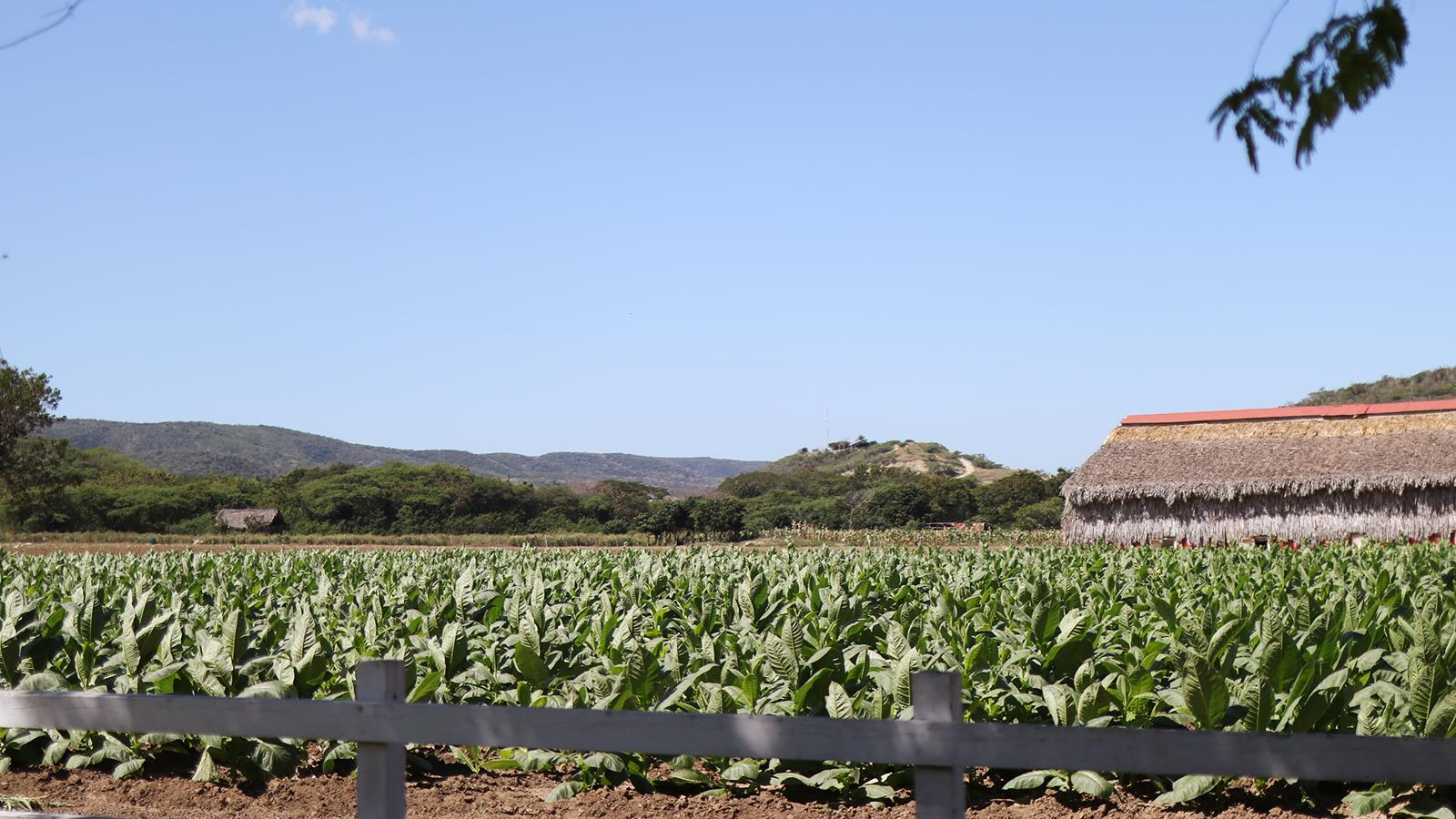 ProCigar, Day Two: A Visit To Litto Gomez's Farm