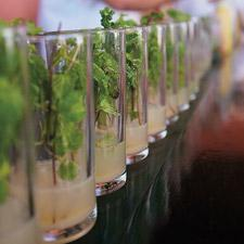A lineup of mojitos.