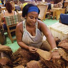 Woman rolling tobacco in La Corona cigar factory, Havana, Cuba.