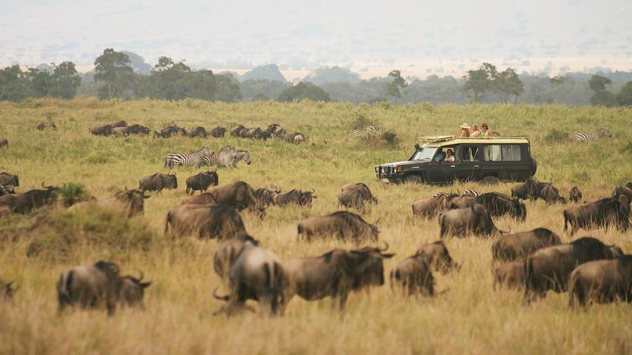 New Age Of Safaris