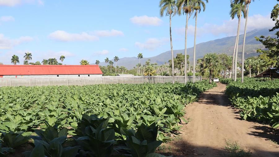 Touring Jochy Blanco's Farm and the Tabacalera Palma Cigar Factory