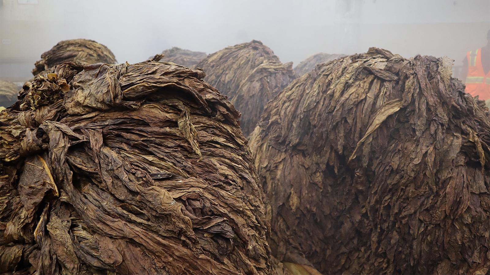 Piles of tobacco inside Tabacalera de Garcia in the Dominican.