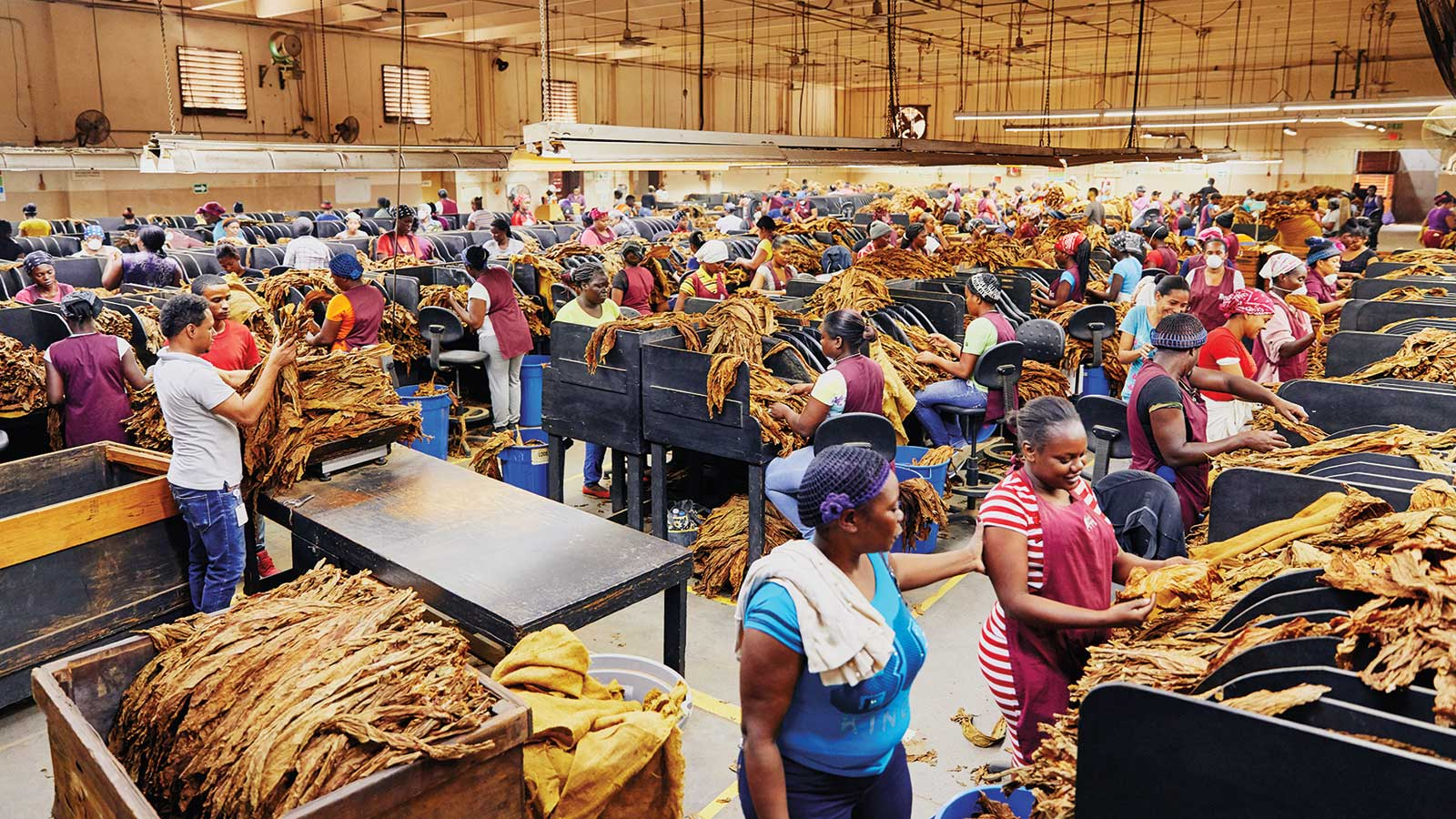 The sorting room is an expansive operation where tobacco is separated by size and color.