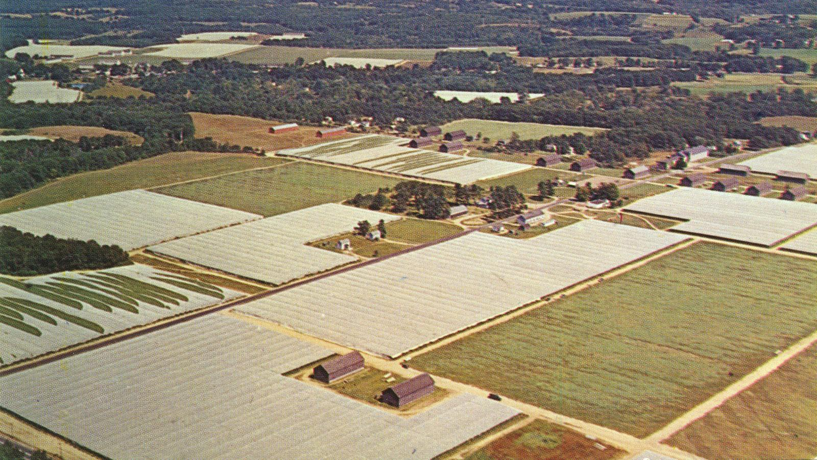 An aerial view from the 1960s showing the expansive shade field tents in the Connecticut River Valley. Around 81,500 acres of shade tobacco was grown in the Valley during that time.