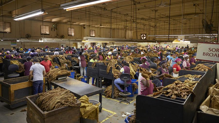 Multiple Cigar Factories Shut Down in the Dominican Republic