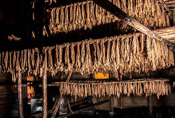 One of Davidoff's Honduran curing barns.
