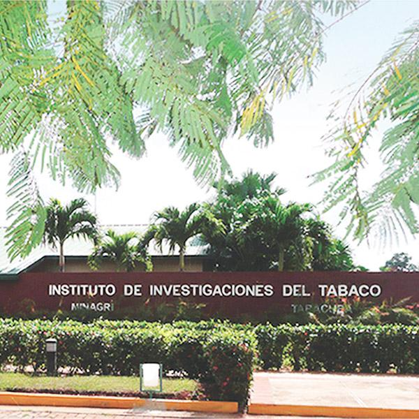 Cuba's Tobacco Research Institute, known as Instituto de Investigaciones del Tabaco, controls the seeds used by the farmers and conducts research to improve seed strains via natural methods of crossing and selection.
