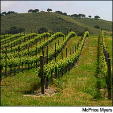 Kaena made a powerful 2010 Grenache from the Larner Vineyard in the Santa Ynez Valley.