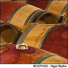 The 2009 Bordeaux futures have sold. Now the wine just needs to mature.