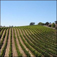 Jaffurs' vineyards were the source of an outstanding 2008 Petite Sirah.