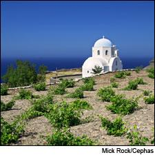 The fine wines of Greece continue to improve.
