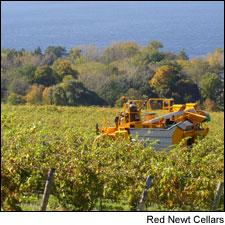 Red Newt Cellars makes several Rieslings from Sawmill Creek Vineyards, on the east side of Seneca Lake.