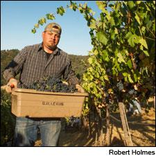 A worker harvests Petite Sirah at Somerston Estate Vineyard & Winery in Napa Valley.