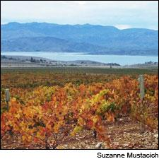 Şükrü Baran grows ancient grapes, closely related to nearby wild vines, in his vineyard near Elazığ in southeast Anatolia.