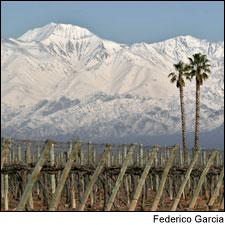 The Finca Las Palmas vineyard is in the Uco Valley, in Argentina's Mendoza region.