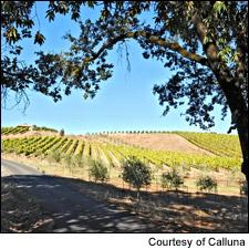 From Calluna comes an outstanding 2009 Merlot.