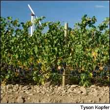 Cayuse's Armada Vineyard is planted in the stone-covered soils known as