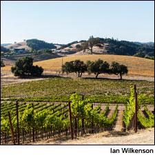 The Linne Calodo winery offers three outstanding Rhône-style red blends from the 2010 vintage in Paso Robles.