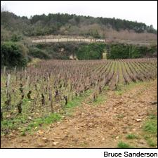 Quarries among the vineyards are not unusual, like the one seen here in Gevrey-Chambertin Petits Cazetiers, an enclave of Combe aux Moines.