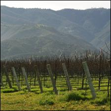 Pinot Noir Vineyards in Santa Lucia Highlands, such as Rosella's, fared well in 2012.