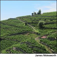 The weathered granite atop the hill of Hermitage is the source for Michael Chapoutier's L'Ermite bottlings.