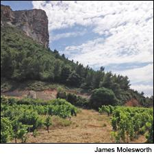 The imposing Cap Canaille stands guard over Clos Ste.-Magdeleine's vineyards and the bucolic fishing town of Cassis.