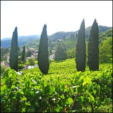 Nino Franco's Grave di Stecca vineyard near Valdobbiadene is a small parcel of Glera vines that produce a single-vineyard sparkler.