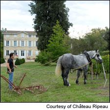 Château Ripeau has been sold to the former owners of Château La Rivière.