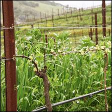 Ampelos Cellars uses sustainable, organic and biodynamic agriculture in its vineyards.