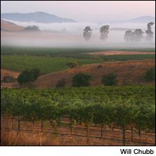Gloria Ferrer made a luscious sparkling wine from Chardonnay grown in the foggy Carneros appellation.