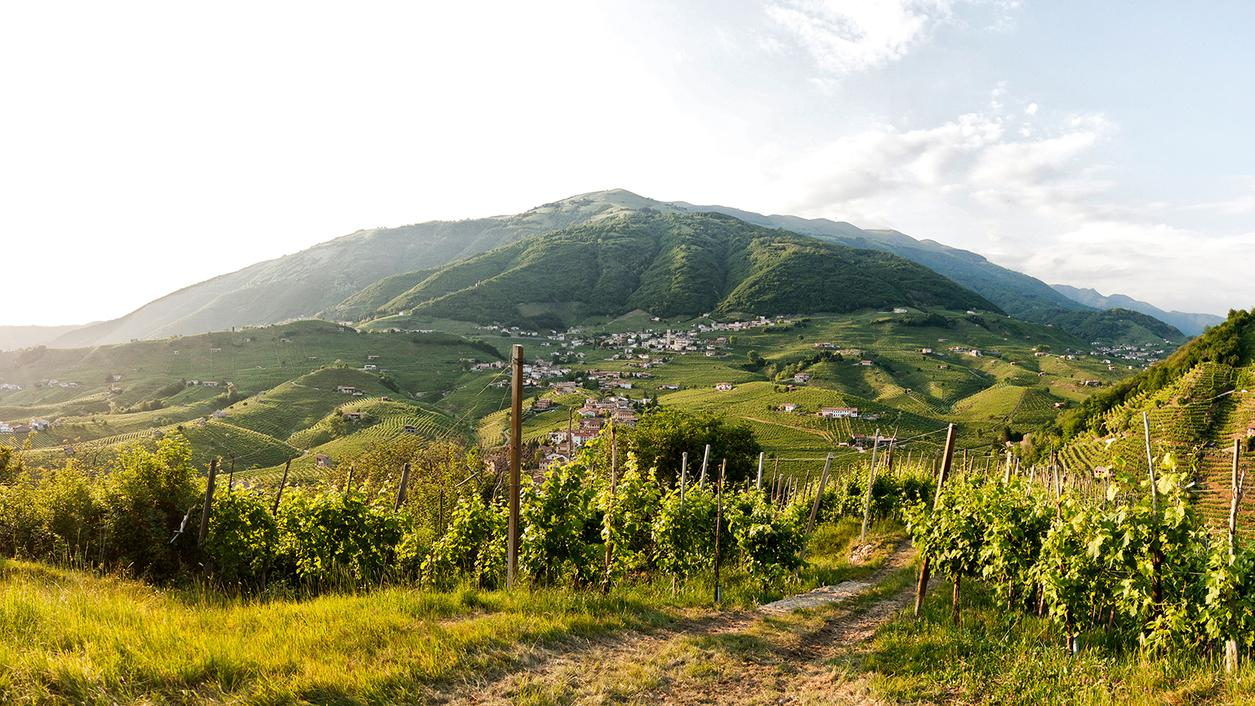 Battle for the Soul of Prosecco, Part 2