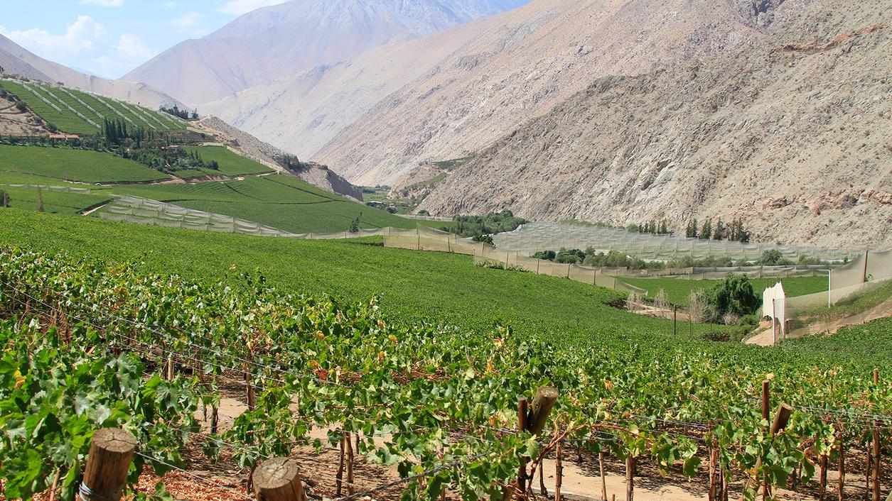 Drought Plagues Winemakers in Northern Chile