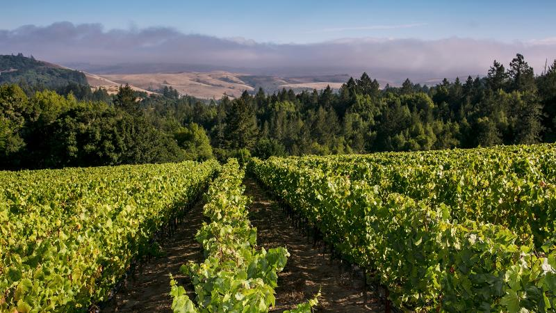 Platt Vineyard, in the Sonoma Coast wine region, has been purchased by Russian River Partners.