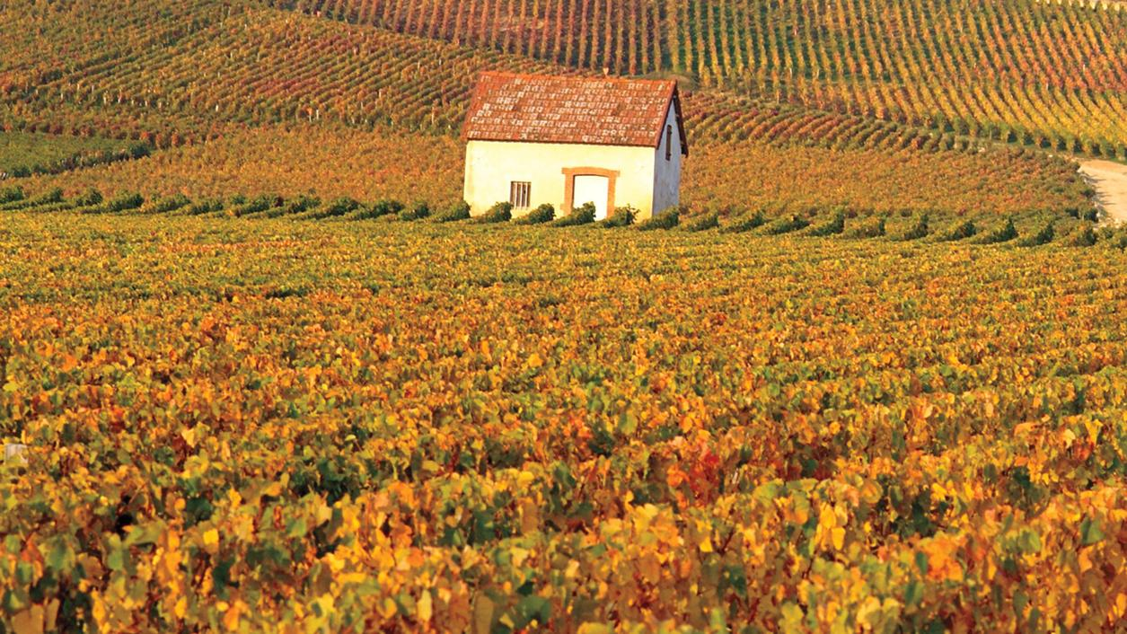 Burgundy and Champagne Vineyards Are Officially Cultural Treasures