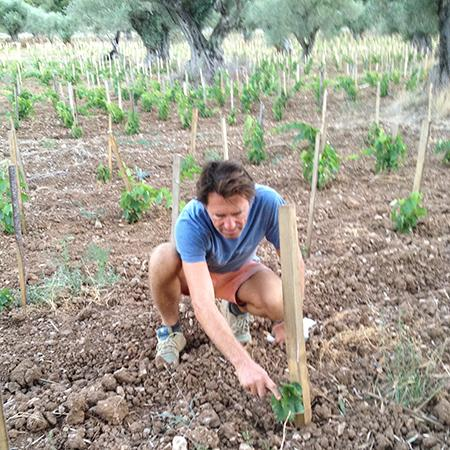 Jean-Marc Espinasse tends to one of his infant vines, which are struggling to survive this summer's intense heat in southern France.
